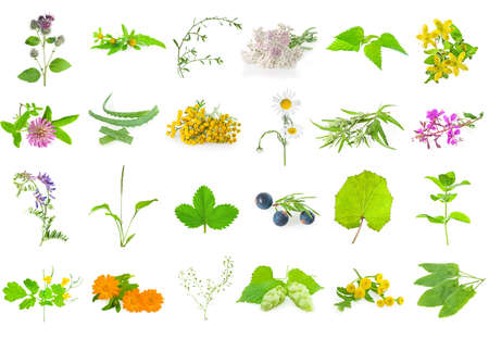 Set of medicinal herbs , aromatic herbs and flowers, isolated on white.