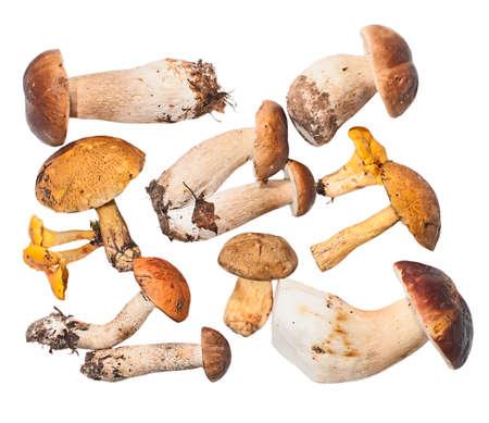 Set of edible mushrooms: white fungus, flywheel, boletus, orange-cap boletus, chanterelles photo