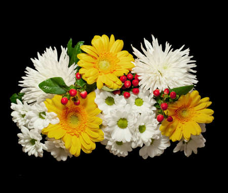 Bouquet of white flowers of a chrysanthemum, yellow Transvaal daisies and red berries Hypericum isolated on black photo