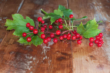 guelder rose berry: Ripe viburnum berries and leaves on a wooden background.