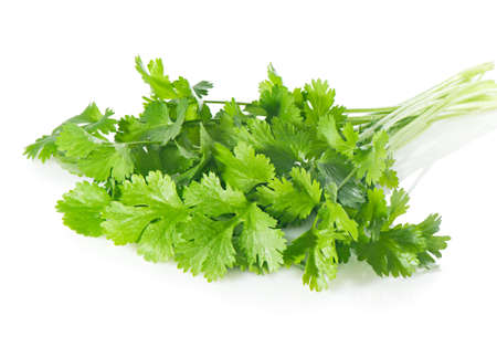 curly leafed: Fresh coriander leaves on  white.