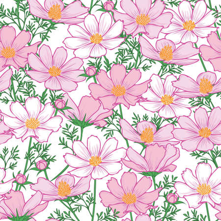 Floral seamless pattern with cosmos flower. Pink flowers on white background design.
