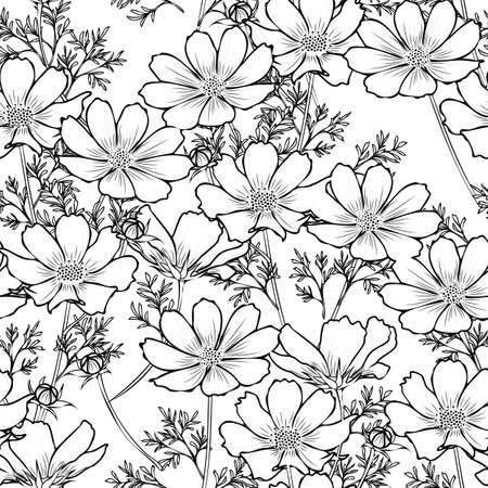 Floral seamless pattern with cosmos flower. Black and White design.