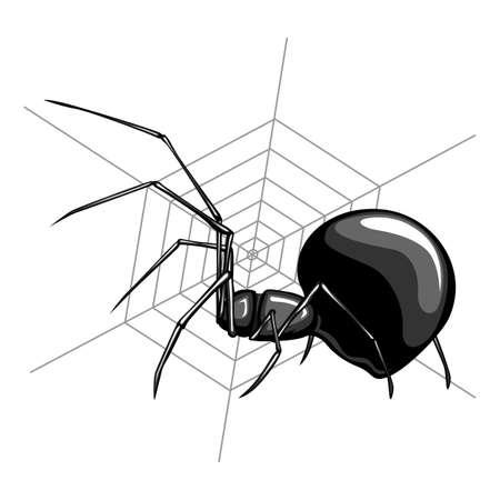 viuda: Viuda Negro es uno de los m�s de ara�a mortal Vectores
