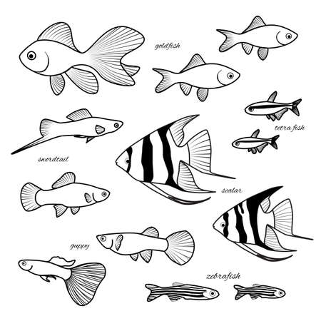 zebrafish: Aquarium fish collection. Goldfish, guppy, zebrafish, scalar, cardinal or neon tetra fish, swordtail vector hand drawn illustration. Xiphophorus hellerii, paracheirodon innesi, Danio rerio, Poecilia reticulata, angelfish pterophyllum