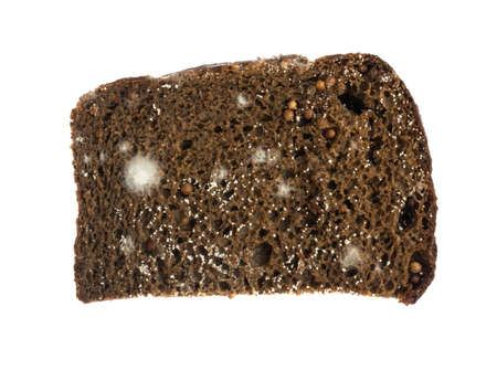 Mold on Black Bread Isolated on White Background
