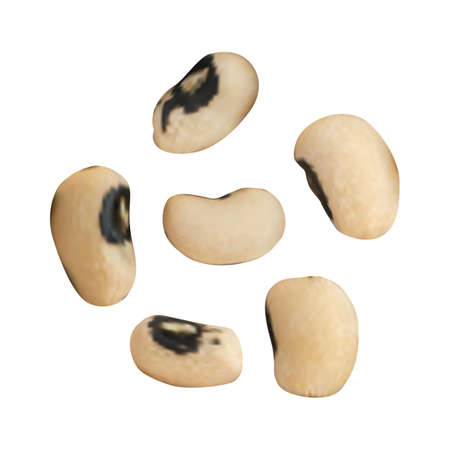 cutouts: Dry Vector Beans Isolated on White Background