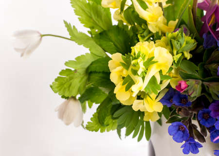 Beautiful Spring Flowers Bouquet. Yellow, Blue, White and Purple Forest Primroses