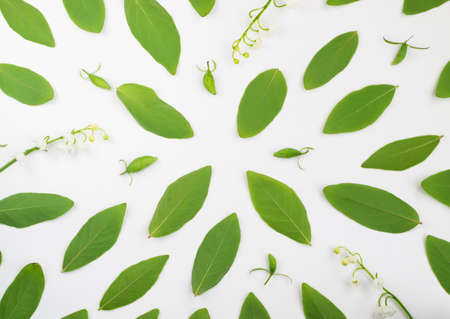Pattern made of Young Green Leaves of Honeysuckle and Spring Flowers. Background with Lily of the Valley Flat Lay