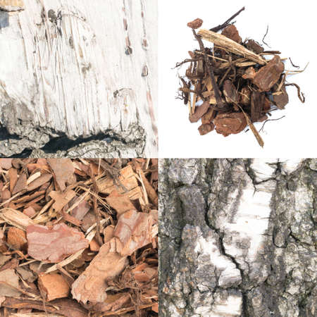 Set of Natural Bark Backgrounds. Old Forest Tree Barks Collection. Wood Chips on White Background