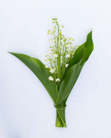 mayflower: Bouquet of Lilies of the Valley on White Background