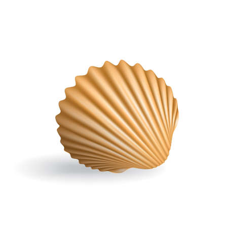 mollusc: Realistic Seashell Isolated on White Background. Beautiful Clam Mollusc Shell. 3d Vector Sea Shell Illustration