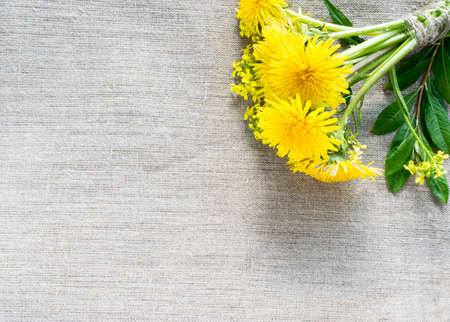 Dandelion Flowers on Burlap Rustic Background. Beautiful Yellow Blossoms Close Up. Fresh Wildflowers with Green Grass and Leaves Top View