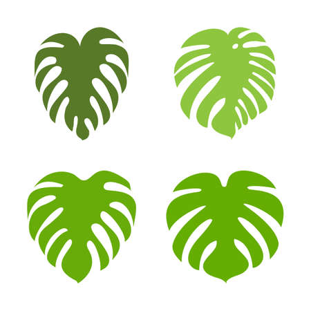 Monstera leaf vector icon collection. Exotic tropical plant silhouettes. Illustration