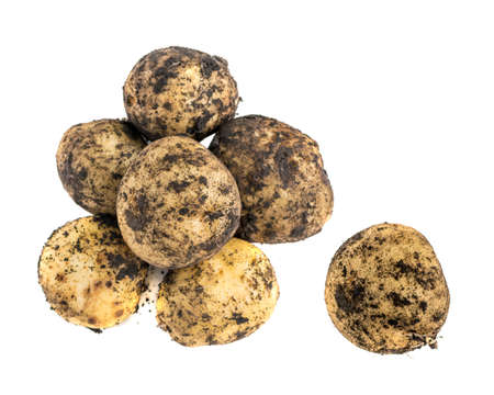 Dirty young potatoes isolated on white background. Unwashed new vegetable roots or tubers with clipping path