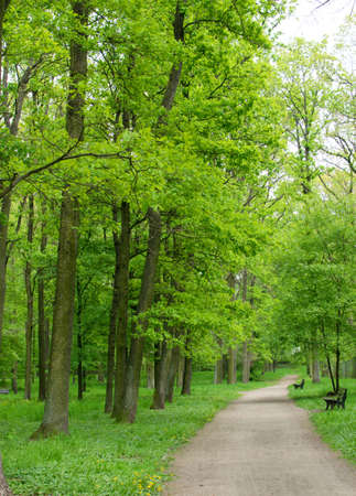 Bike Path or Country Walking Path in Old Green Park. Spring Alley with Chestnuts and Oaks Stock Photo