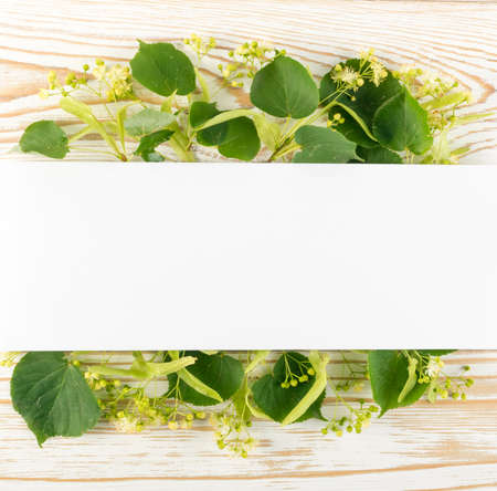 Linden Flowers on Wooden Background. Creative Summer Layout over Wood Table Texture. Tilia Blossom Flat Lay with Place for Text Stock Photo