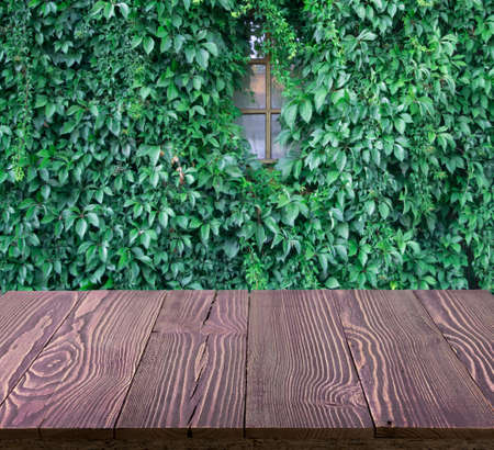 Wood table outside with lush green wall of hedera helix or creeper foliage in summer day. Ivy carpet or beautiful natural herbal background, leaf pattern, texture for product montage