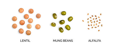Vector realistic 3d illustration of legumes collection isolated on white background. Edible legume of lentils, mung beans and alfalfa top view Illustration