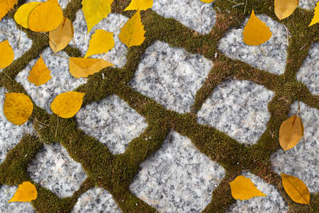 Autumn background with yellow leaves on old gray pavement or granite cobblestone road top view. Fall texture with ancient brick granite tiles