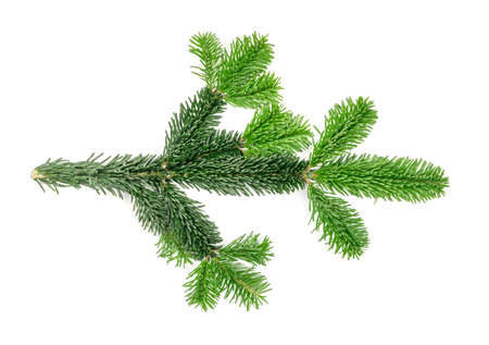 Ramita de abeto verde natural aislado sobre fondo blanco. Exuberantes ramas de abeto o ramitas de pino ramitas textura vista superior