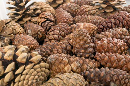 Dry brown pine cones background. Pine cones texture or pattern for card and decoration