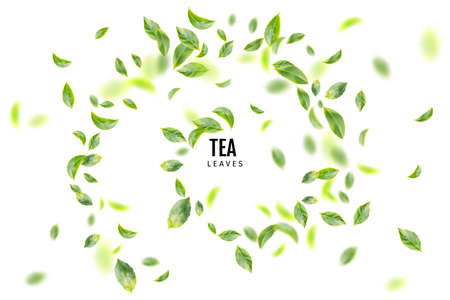 Beautiful Flying Green Tea Leaf Realistic 3d Background. Tea Leaves Vortex or Tea Leaves Pattern with Place for Text Imagens
