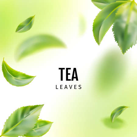 Beautiful Flying Green Tea Leaf Realistic Background. Tea Leaves Vortex or Tea Leaves Pattern with Place for Text