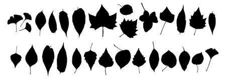 Black autumn leaves or foliage silhouettes isolated on white background.