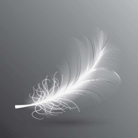 White flying bird feather isolated on dark background.