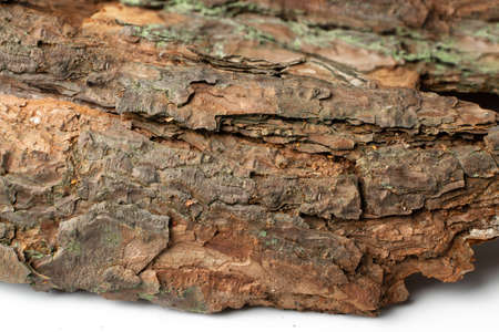 Natural Pine, Cedar or Oak Tree Bark Texture Pattern with Copy Space for Text