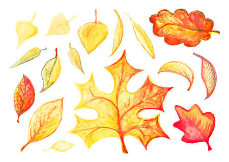 Watercolor autumn leaves or foliage silhouettes isolated on white background. Hand drawn water color fall tree leaf shapes with maple, oak, birch and other nordic leave