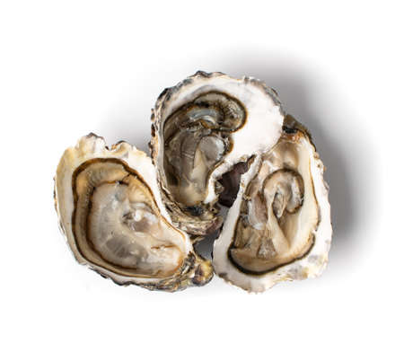 Fresh opened oyster half isolated on white background. Raw french oysters mollusc, shellfish or mussel top view