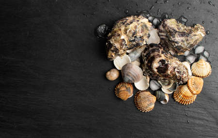 Fresh closed oysters on black background with ice. Raw molluscs, shellfish or mussels in seafood restaurant top view with copy space