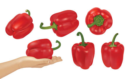 Whole paprika or red sweet peppers collection isolated. Big set of realistic 3d illustration of human hand holding bell pepper or Bulgarian pepper