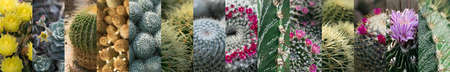 Various Cactuses Collage. Different Cactus Collection, Spiky Cactaceae Mix, Succulent Assortment