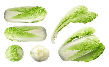 Whole Chinese Cabbage, Napa or Wombok Set Isolated. Raw Fresh Green Cabbage Realistic Vector Illustraton