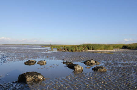 salt marsh with tidal plains, rocks and green grass along the sea in holland in springtime Stock Photo