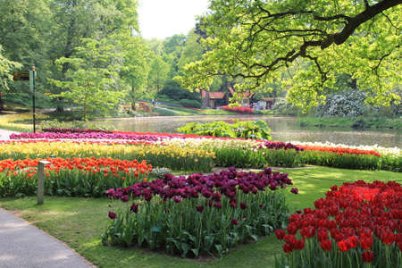 beautiful groups of colorful tulips in the Keukenhof gardens with a pond and trees with green leaves in the netherlands in springtime Stockfoto