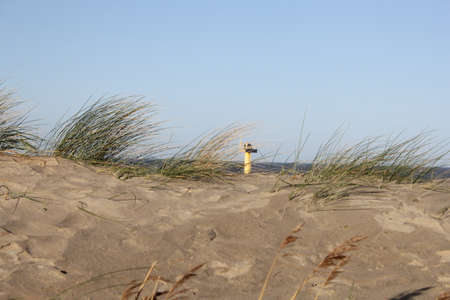 sand dunes with waving marram grass at the dutch coast in winter