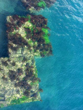 Plataforma submarina cubiertos por algas  Foto de archivo - 1228638