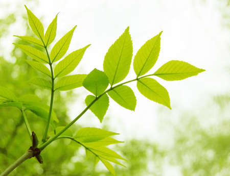 branch of fresh green leaves with copy space Stock Photo