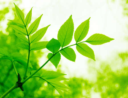 branch of fresh green leaves with copy space Stock Photo - 3409486