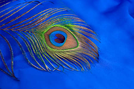 Detail of peacock feather on blue satin  background