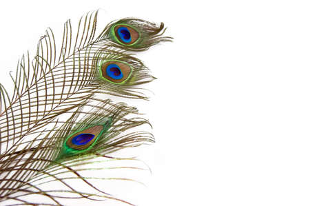 three peacock feathers isolated over white Stock Photo