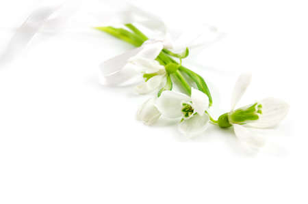 Fragile snowdrops with ribbon over white Stock Photo - 4325738