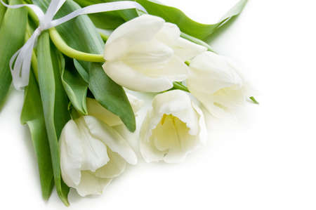 Some white tulips over white with ribbon Stock Photo