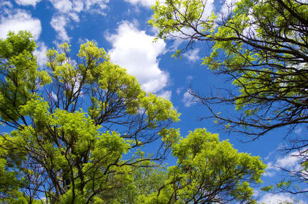 Sky opening between fresh green branches Stock Photo - 4844696