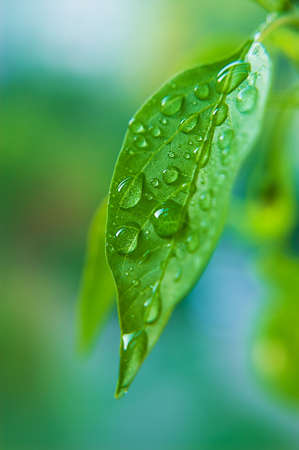 Close up waterdrops of the fresh green leaf