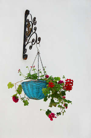 Flowerpot with geranium over textured white wall photo